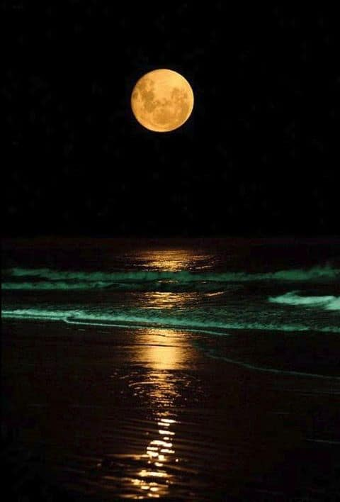 full moon at the reef restaurant in st augustine florida